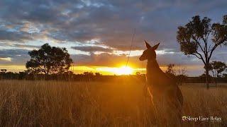 Gentle Relaxing Meditation Music • Beautiful Nature Australia, Instant Calm Sleep Music ★ 84
