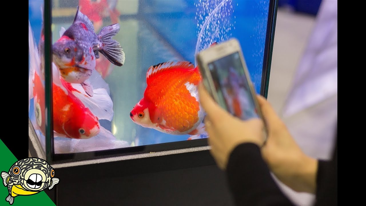 hong-kong-goldfish-market-vlog