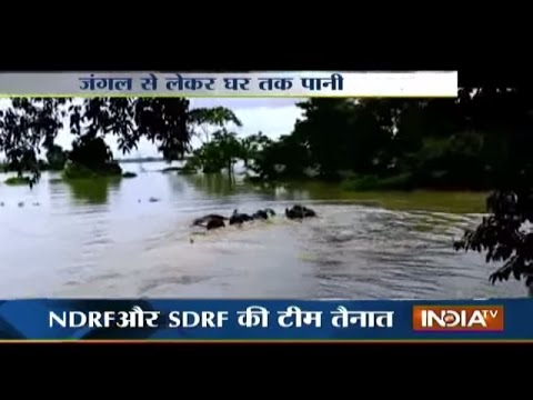 Assam Flood Disturbs Wildlife, Water Enter Kaziranga National Park - India Tv