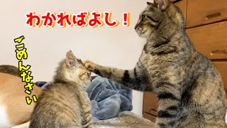ヤンチャな子猫に一生懸命教えようとするお姉ちゃん猫 Lovely family with kitten
