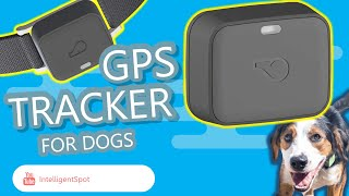 Whistle GO Explore Health & Location Tracker Review | Pets GPS Tracker Review 2020