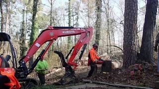 Dangerous tree cutting with Husqvarna & Kubota mini excavator