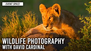 Wildlife Photography, from Gear to Workflow, with David Cardinal | B&H Event Space