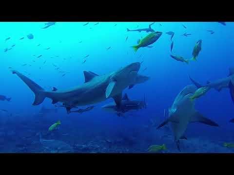 20171214 Scuba Diving in Fiji: Shark Reef Marine Reserve (Dive 1)