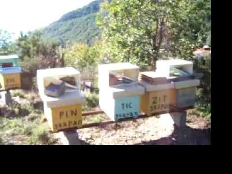 Geapan apiario Framura 2012 Foce del Prato