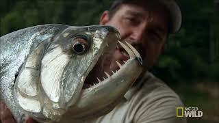 Most Dangerous Fish In The World/Amazon rainforest Tribe/Jungle ke Aadivasi/Amazon Forest Tribe