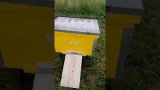 Строительство пчельника, ограждения забором.