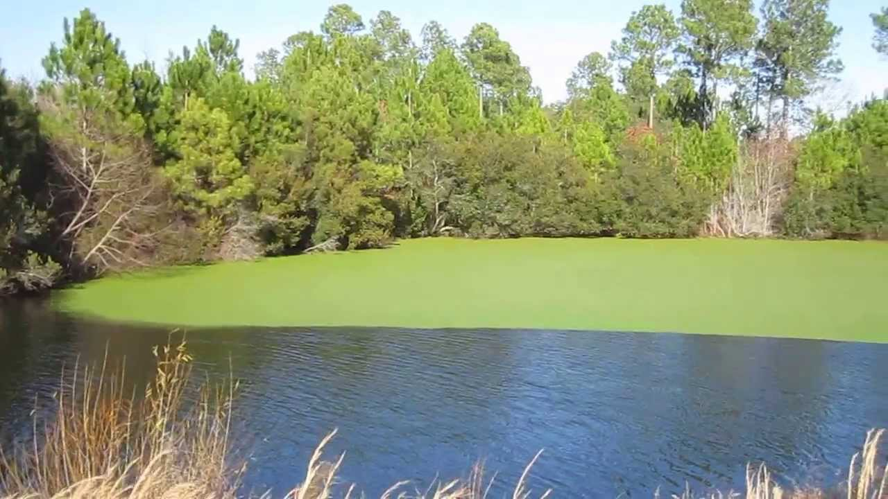 060. Golf Course - Winding River Plantation - NC Golf ...