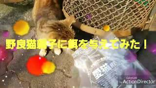 野良猫親子に餌を与えてみた。優しいお母さん猫 thumbnail