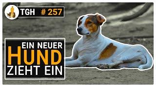 Ein neuer Hund zieht ein   Was ist die ersten Wochen wichtig?  TGH 257