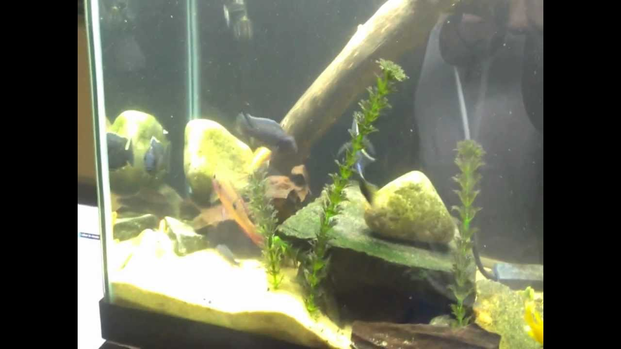 Aquascaping with driftwood - YouTube