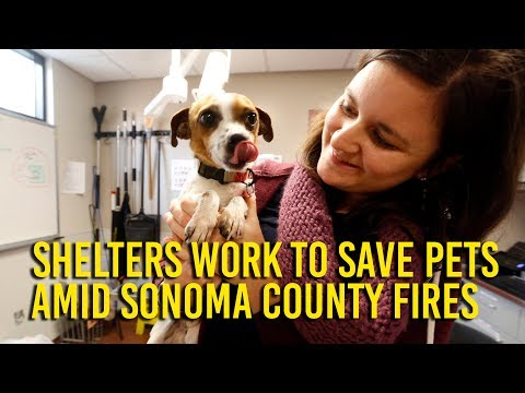 Shelters band together to save animals, aid pet owners
