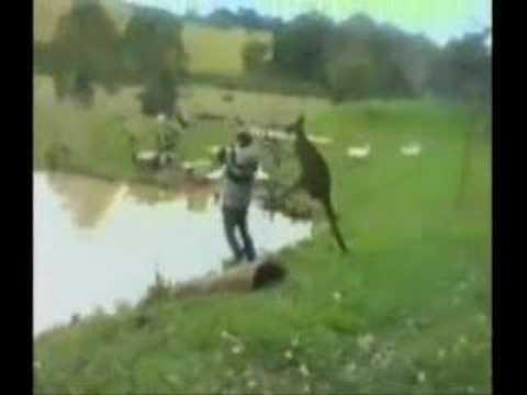 Deadly Animals (Come to Australia)