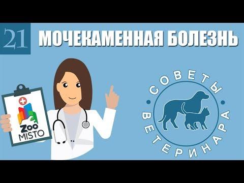 Вопрос: Можно ли вылечить взрослого кота от мочекаменной болезни?