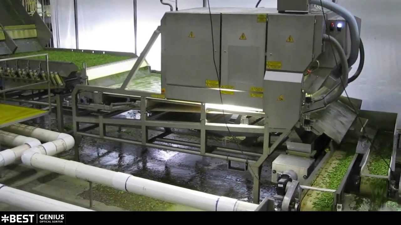 Cut green bean sorter Genius - TOMRA Sorting