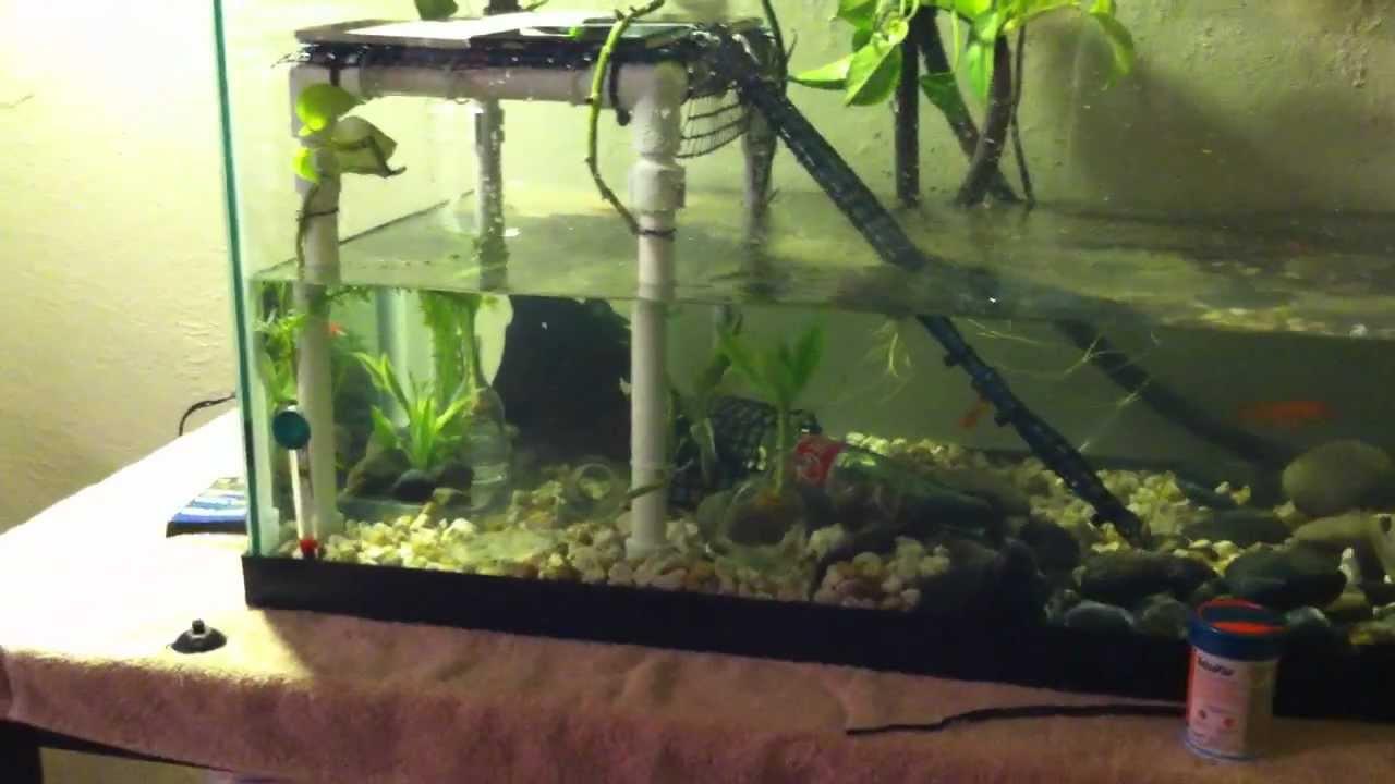 Diy Aquarium Turtle Platform Allcanwear Org