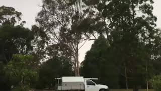 Lightning Strikes Tree Feet Away from Group of People - 1018673-1
