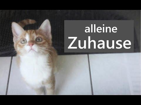 Katze alleine lassen wochenende