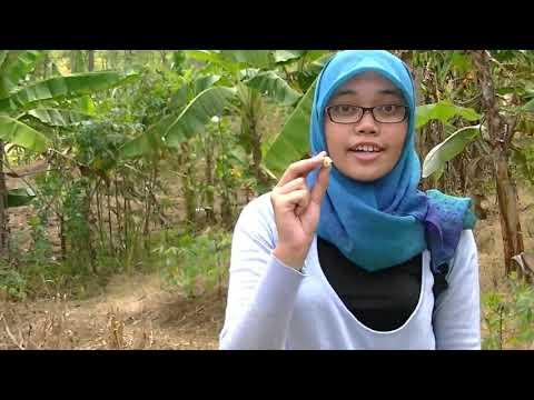 indonesia-geography-gigi-hiu-raksasa-megalodon-di-selat-muria-dan-selatan-jawa