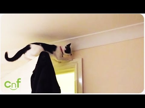 Getting Stretched Thin | Funny Cat Fail