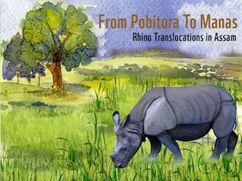 From Pobitora to Manas