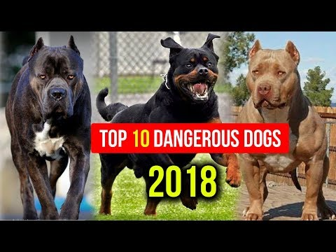Top 10 Most Dangerous Dog Breed in the World 2018 || Dogs Around The World
