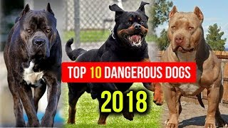 Top 10 Most Dangerous Dog Breed in the World 2018    Dogs Around The World