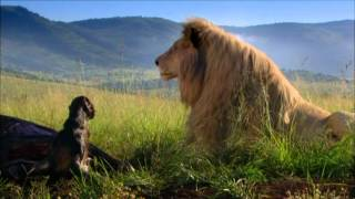 WHITE LION - trailer ufficiale