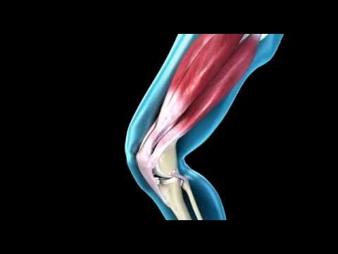 knee joint - range of movement - 3d medical animation || abp, Muscles