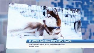 Выходные в Перми: собака-обнимака, зимний триатлон и выставка «Арт-Пермь»