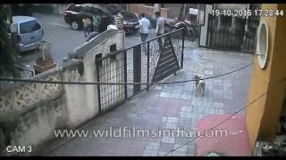 Dog killed as car runs it over: captured on CCTV