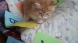 invata la francez de distreaza: in alfabet dintr-o la Z cu copilul pisica
