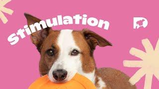 Stimulation: Surfing Dog