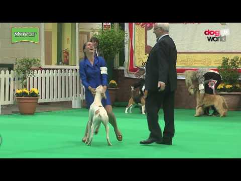 Birmingham National Dog Show 2017 - Best Puppy in Show