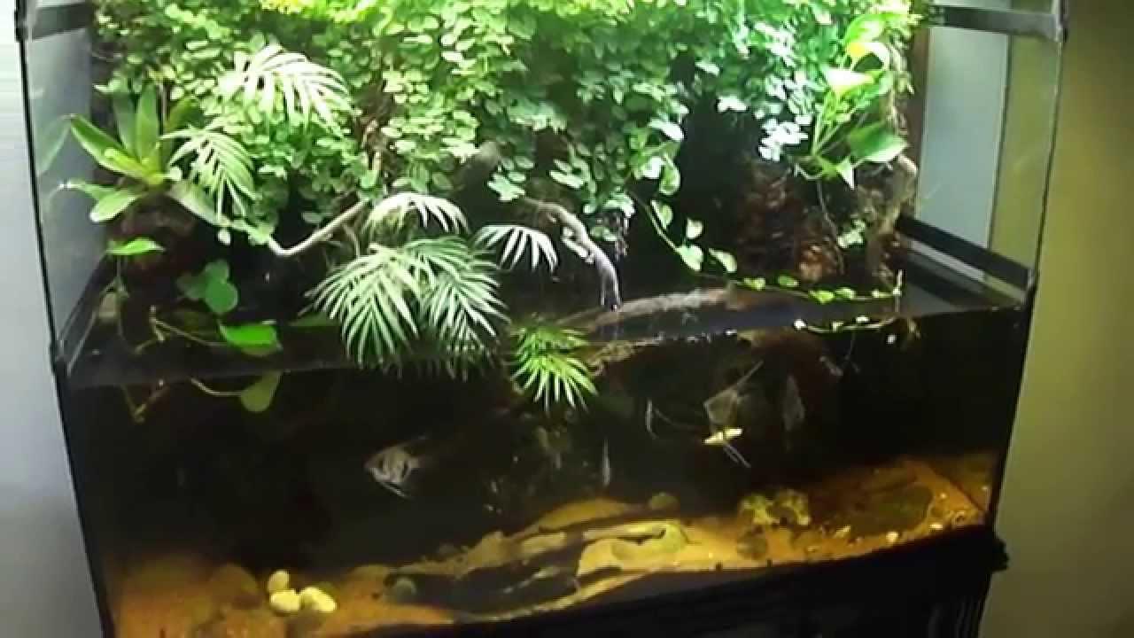 Paludario Biohabitat Jardin Y Decoraci 243 N Interior Youtube