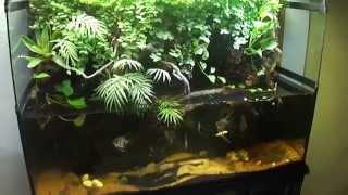 Paludario Biohabitat: jardin y decoración interior