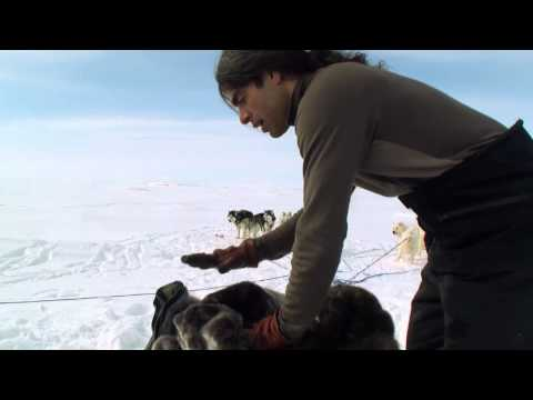 Dog Sled TRAINING