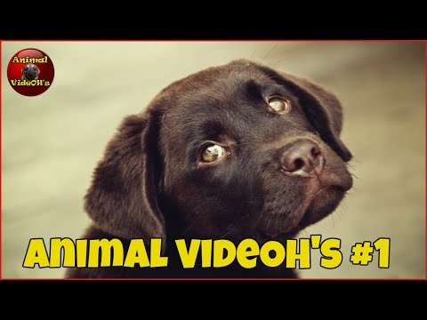 Funny Animals, Funny Pets, Cats, Dogs, Kittens and Puppies - Animals are Amazing! #1