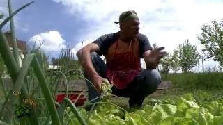 Cu tigaia-n spate -  Ciorbă de salată şi raţă pe varză