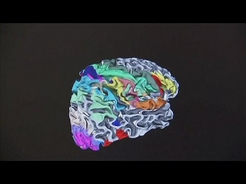 Watching the brain in action - science