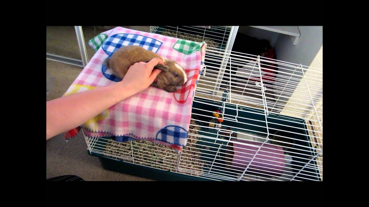 How to hold your rabbit - YouTube