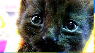 Ответы почемучкам 1 .Зачем кошке нужны усы. Бабушкины сказки  .Zachem cat needs a mustache.