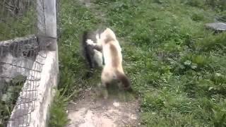 Военный проект - кот Федя.