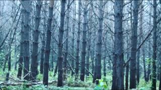 КТО ЗДЕСЬ. Новокузнецкий лес