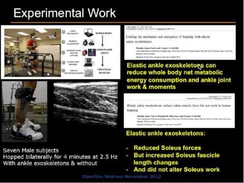 Estimate Muscle Dynamics During Locomotion with Elastic Exoskeletons
