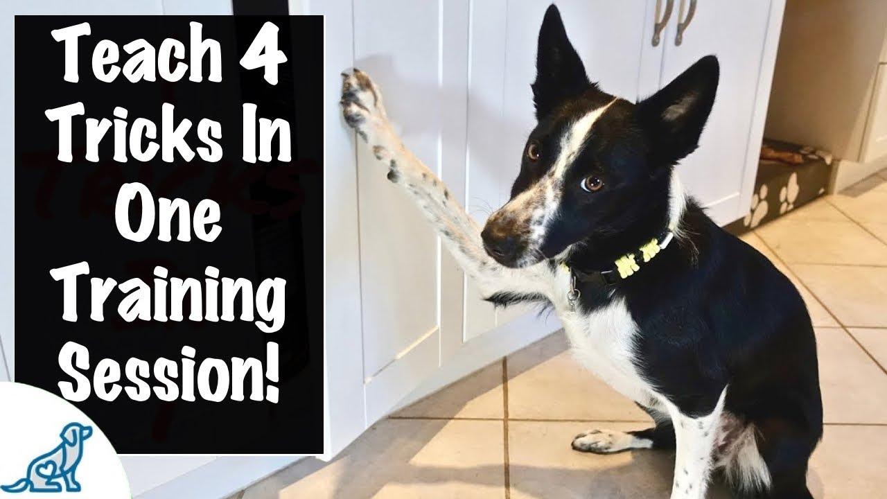 Mccann Dog Training Videos