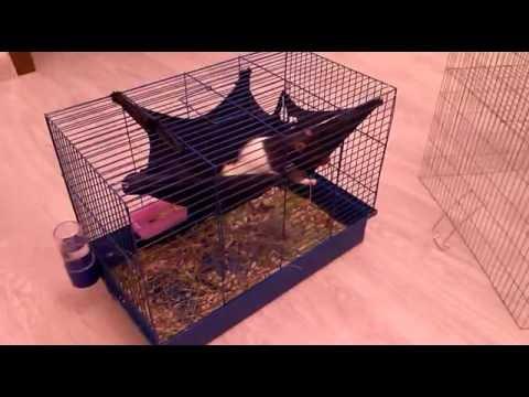 Как сделать домик для крысы 978