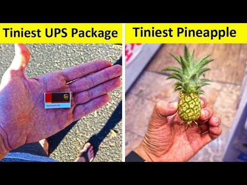 People Who Found The Tiniest Things Ever (NEW PICS!)