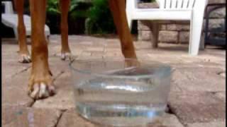 Trick - Ridgeback Blows Bubbles - Positive Dog Training In Jaksonville, Fl