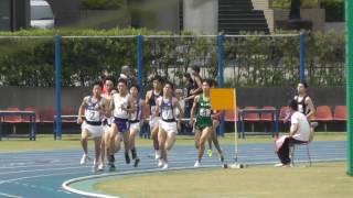 2016 05 14 日体大長距離 男子800 野澤・安達・髙橋